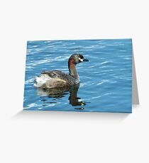 Australian grebe in his finest breeding plummage Greeting Card