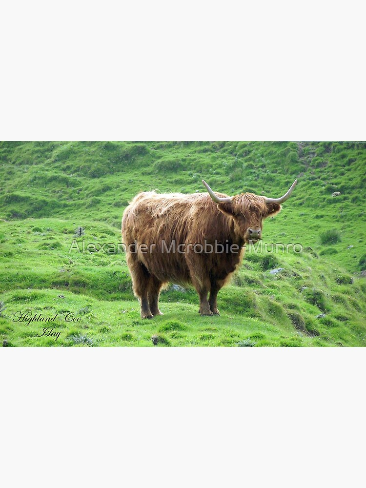 Highland Coo by Alexanderargyll