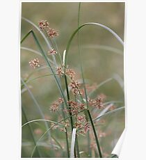 Wild flora V 5406 Poster