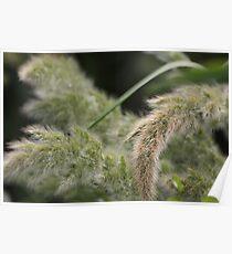 Wild flora VI 5403 Poster