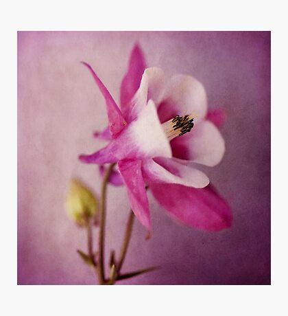 Akelei Photographic Print