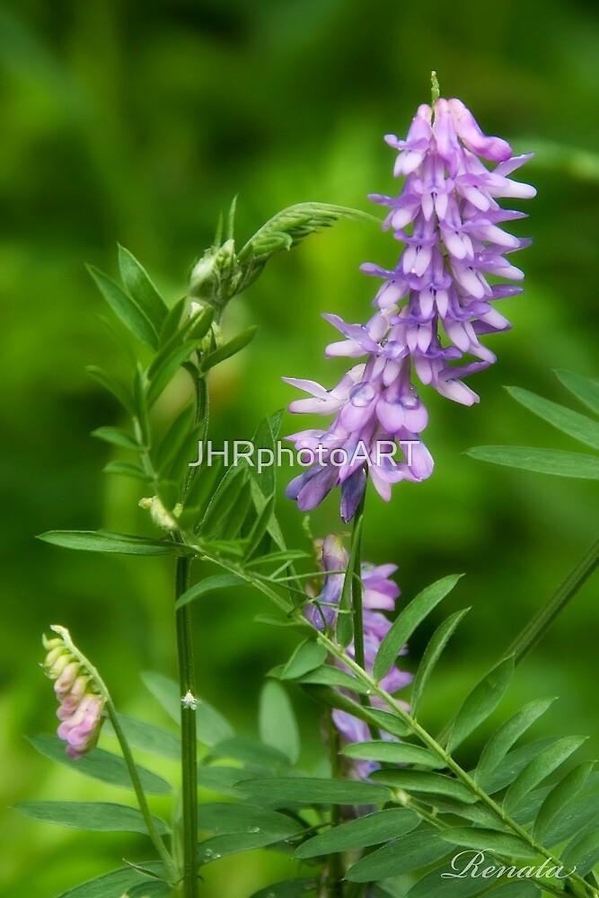 Wild flowers by JHRphotoART