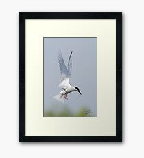 All Wings and Tail Display Framed Print