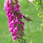 Hummingbird by Michele Markley