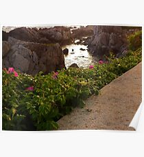 Tidal Pool and Sea Roses Poster