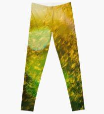 Golden Grass Leggings