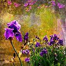 Iris Garden by Jeff Burgess