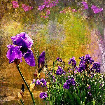 Iris Garden by ImagesFX
