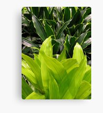 greens+leaves Canvas Print
