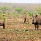 WHITE RHINOCEROS MOTHER AND BABY by Magriet Meintjes