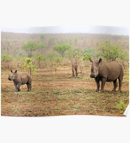 WHITE RHINOCEROS MOTHER AND BABY Poster
