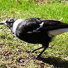 fat worm: happy bird by Tanisha Jowsey