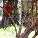Bird of harmony by Tanisha Jowsey