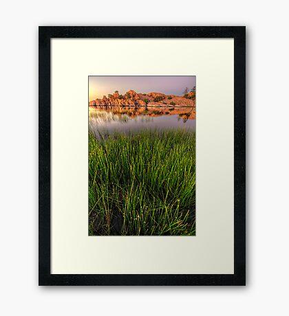 The Secret Life of Grass Framed Print