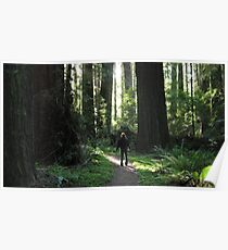 Awe Amongst the Redwoods Poster