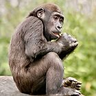 Gernot, Three year old gorilla  by Sheila Smith