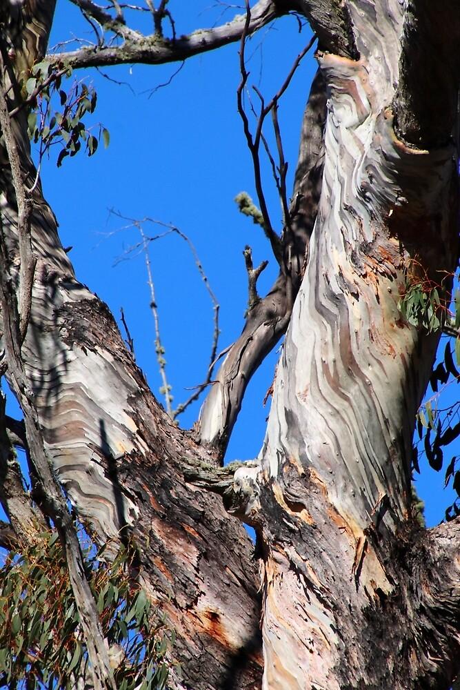 bark patterns - central Tasmania (Australia) by Gaylene Norton