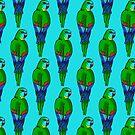 Turquoise Parrot by Skye Elizabeth  Tranter