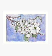 Hartriegel-Blumen - Staatsblume von North Carolina & amp; Virginia von Ela Steel Kunstdruck