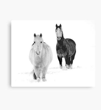 After the Blizzard 16 B&W Metal Print