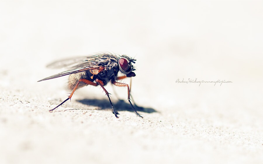 Fly on the Wall by Andreas Stridsberg