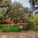 Ein weiterer schöner Teich HDR von TJ Baccari Photography