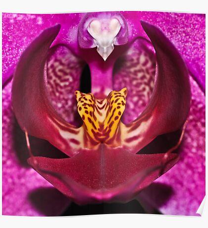 Orchidaceae Cor Poster