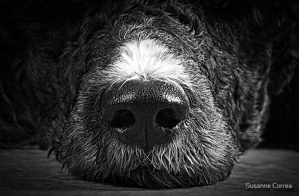 Big Sniffer by Susanne Correa