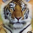DTE - Tiger Beauty by Jon Mack