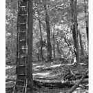 Ladder In The Woods by William Pyle