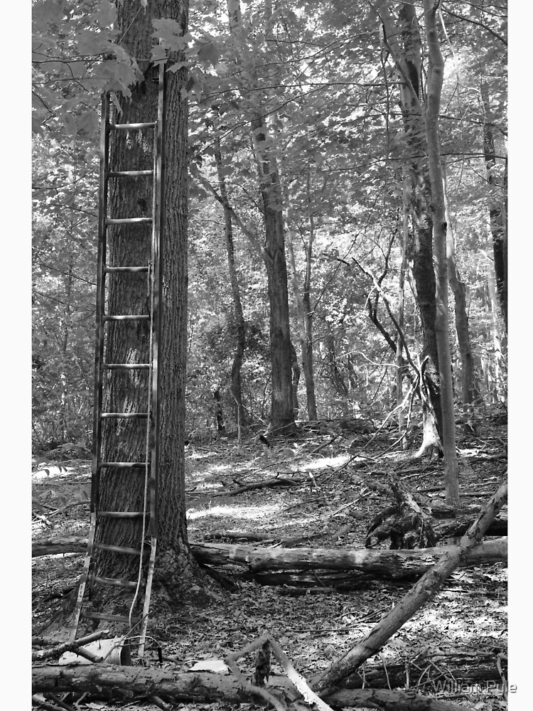 Ladder In The Woods by brushes
