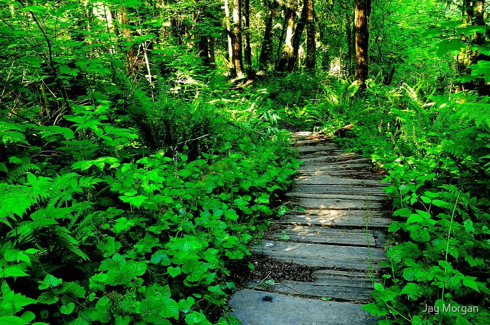 Forest Boardwalk by Jay Morgan