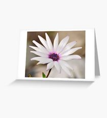 South African Daisy Greeting Card