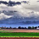 Countryside by Cricket Jones