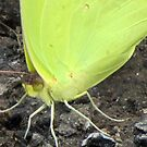 Green Butterfly by Jean Gregory  Evans