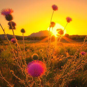 Sun...Flower by boblarsonphoto