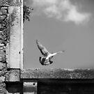 Castle bird. by Sime Jadresin