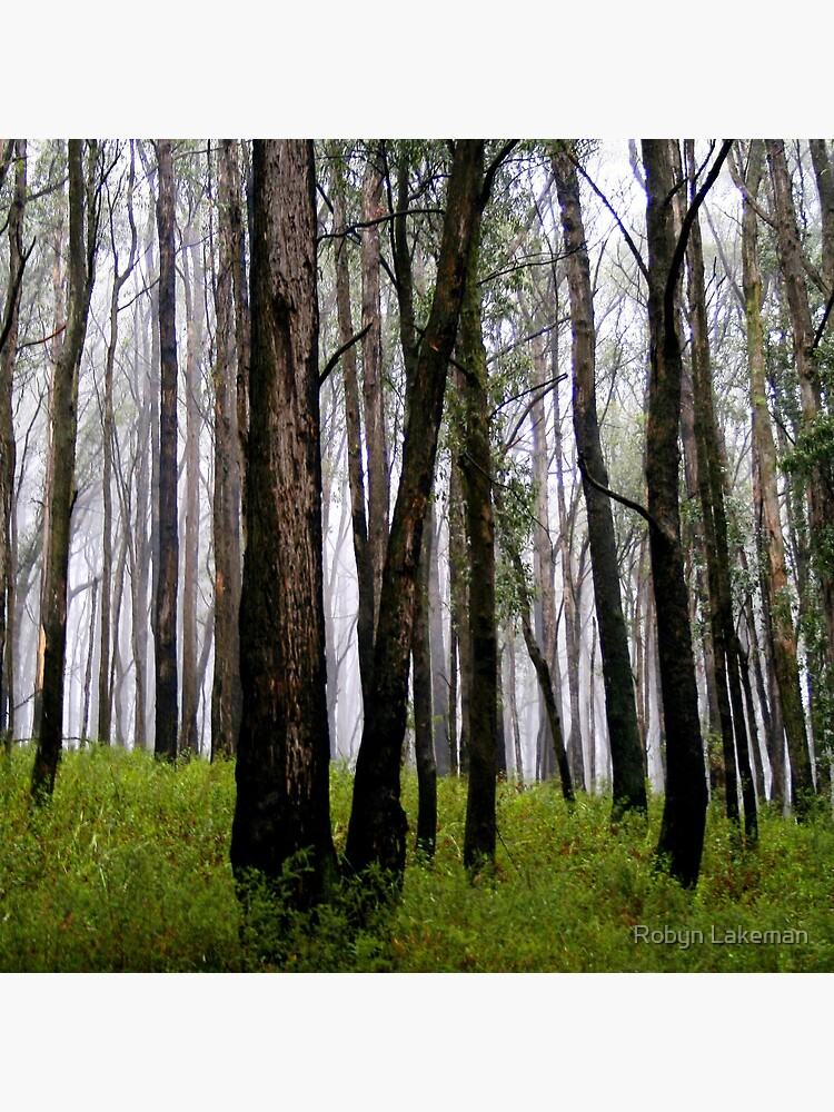 Tall trees in the Mist by Rivergirl