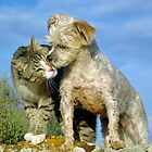 BEST BUDDIES by Helen Akerstrom Photography