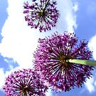 Alliums by Samantha Higgs