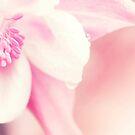 Strawberry Dreams by Stephanie Hillson