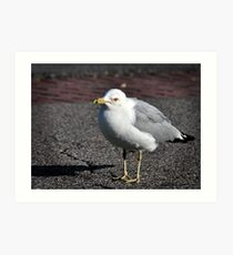 Seagull series 2 Art Print
