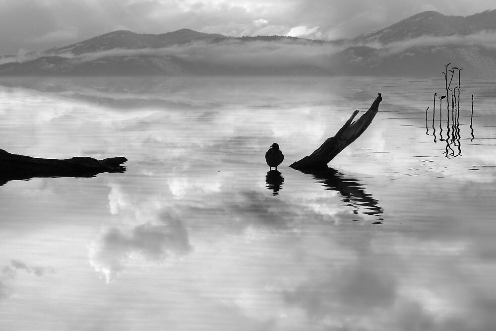 serenity (bw) by John Poon