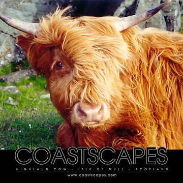 Here's Looking At You - Highland Cow Photograph by coastscapes