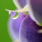 Lupin Dew by Debbie  Roberts