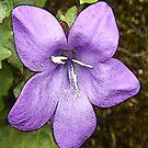 Lilac Beauty by sarnia2