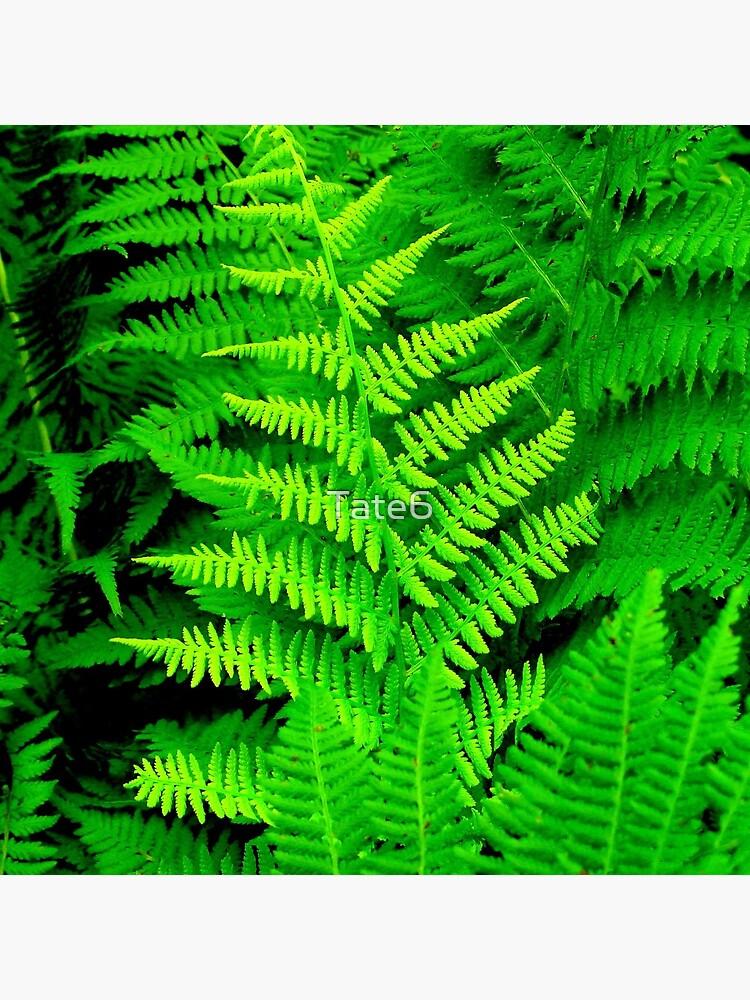Wild Ferns by Tate6