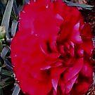 Colour Me- Dead Red by Michelle Scott