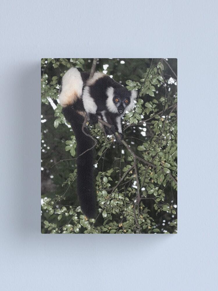 Alternate view of Treeing the lemur Canvas Print