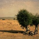 Arid Landscape by mariarty